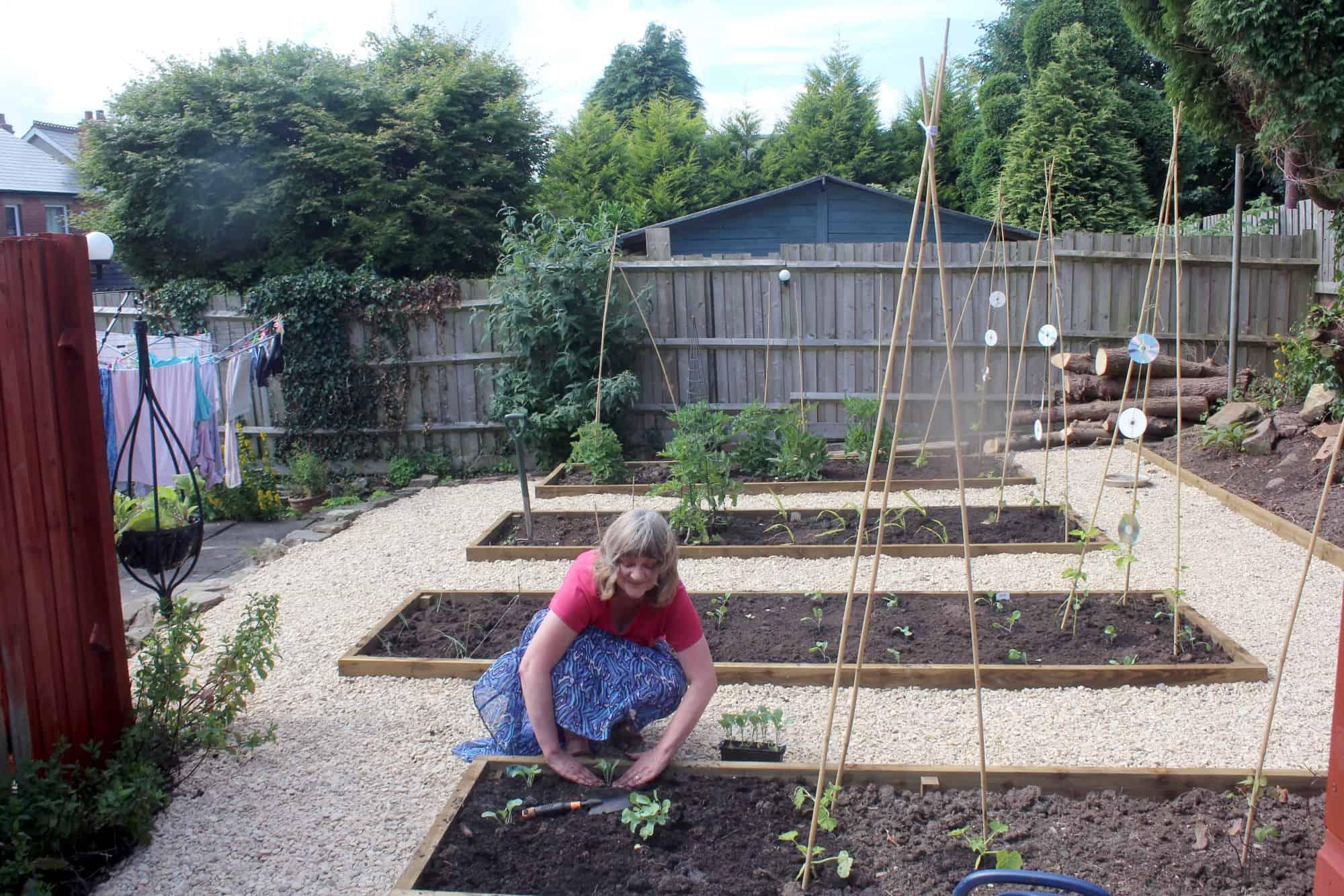 Vanda planting vegetables