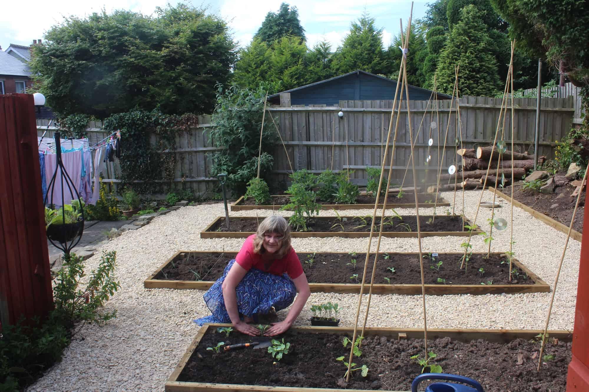 Vanda gardening