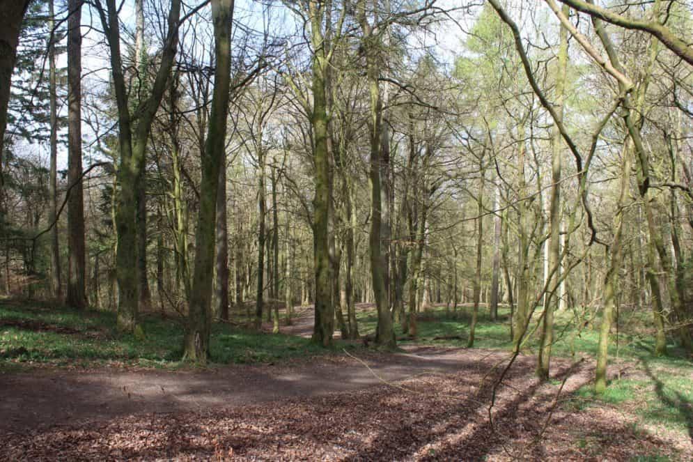 Great area for pea sticks