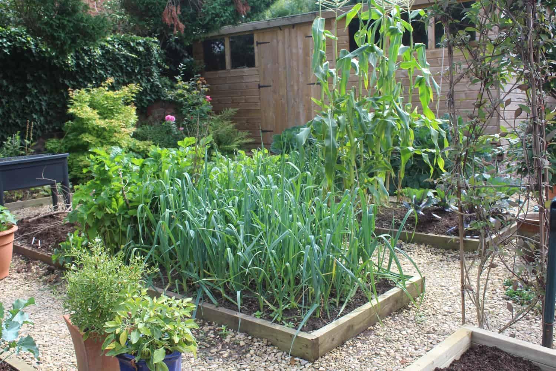 September in the vegetable garden
